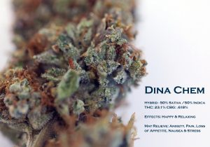 dina chem DATA CARD