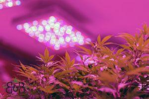 grow room 6