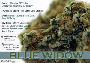 x Blue Widow Data 1128