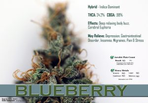 x Blueberry Data 1128
